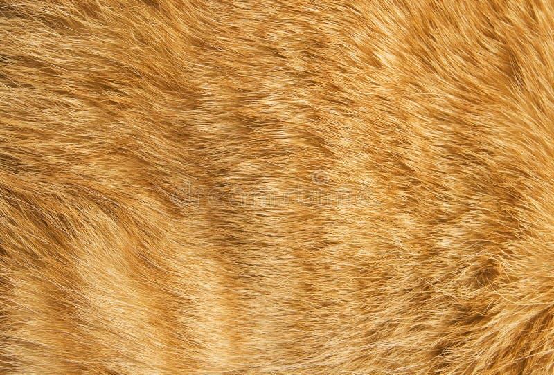 Katzepelzbeschaffenheit lizenzfreies stockbild