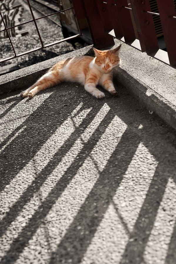 Katzeschlaf Lizenzfreie Stockfotografie