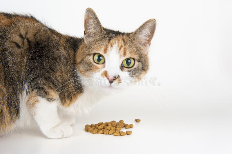Katzezufuhr lizenzfreie stockfotos