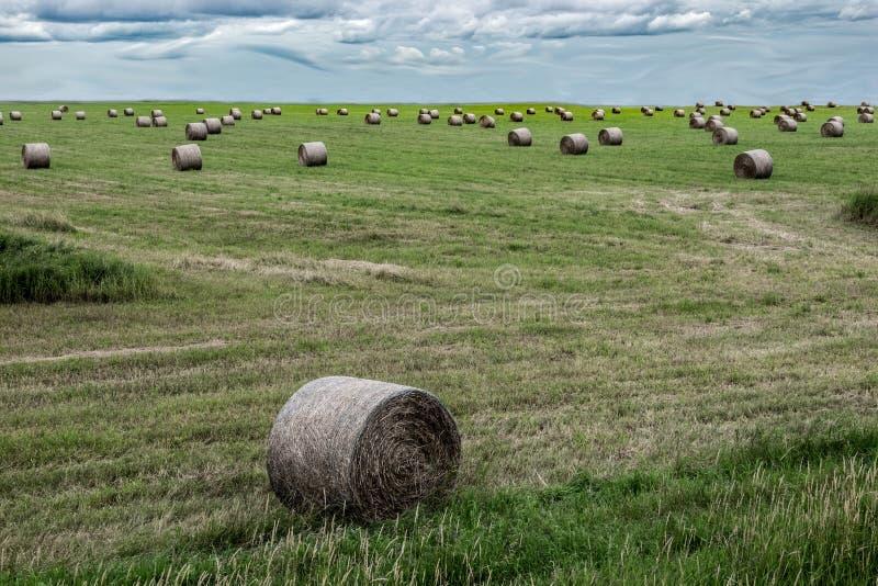 Kaucje siano w polu pod chmurnymi niebami obrazy stock