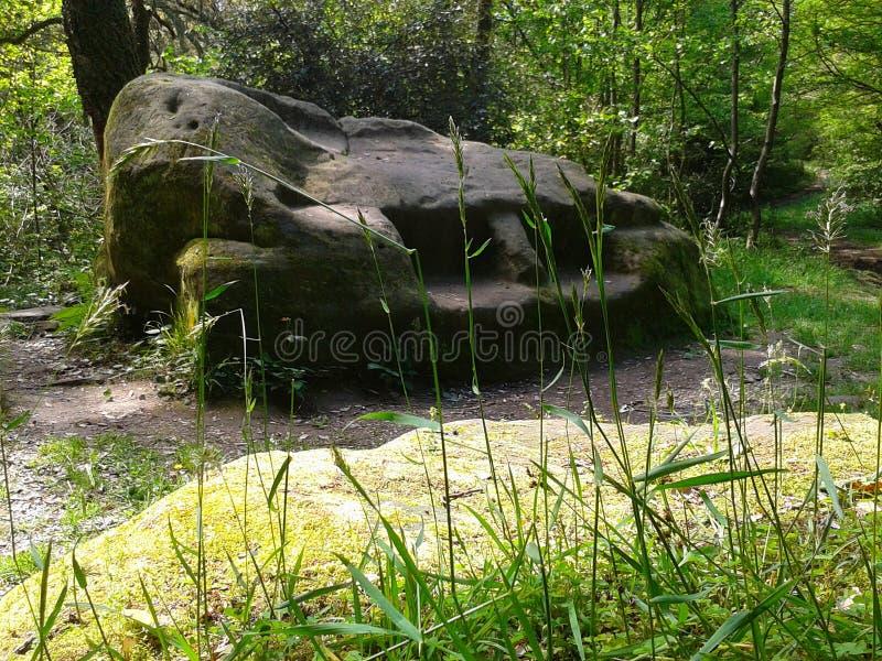 Kaukascy dolmeny zdjęcie royalty free