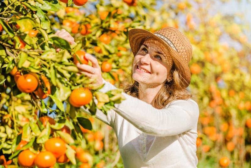 Kaukasische meisje het oogsten mandarins en sinaasappelen binnen royalty-vrije stock foto's