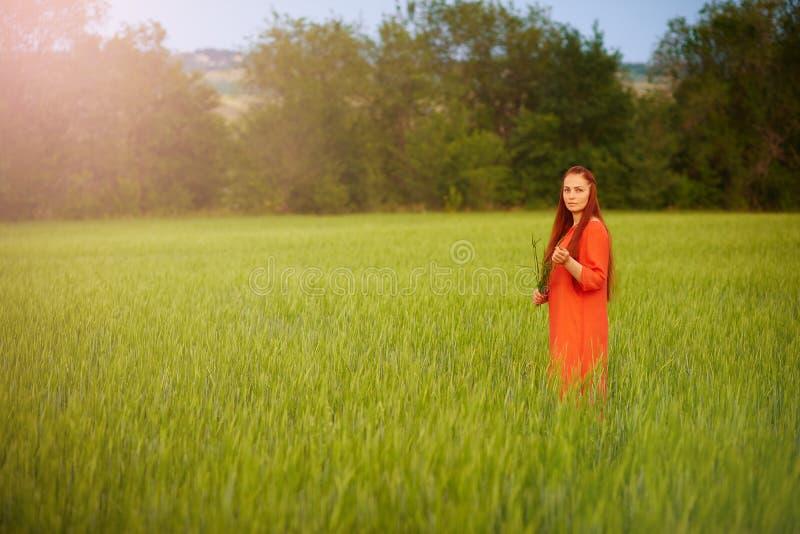 Kaukasische rothaarige Frau in einem roten Kleid gehend auf ein Bauernhoffeld mit Weizen bei Sonnenuntergang an einem Sommertag Z stockbild