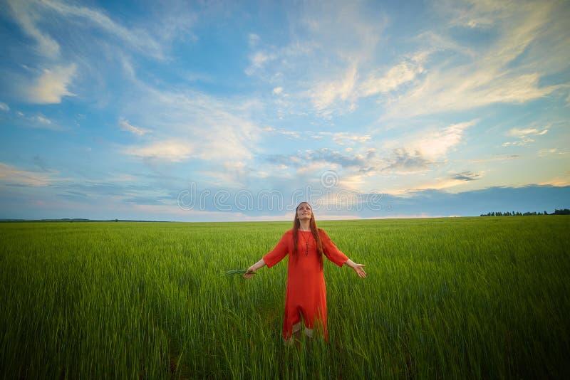 Kaukasische rothaarige Frau in einem roten Kleid gehend auf ein Bauernhoffeld mit Weizen bei Sonnenuntergang an einem Sommertag Z stockfoto