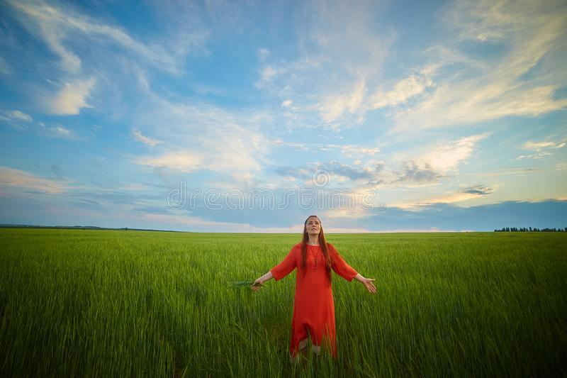 Kaukasische rothaarige Frau in einem roten Kleid gehend auf ein Bauernhoffeld mit Weizen bei Sonnenuntergang an einem Sommertag Z lizenzfreie stockfotos