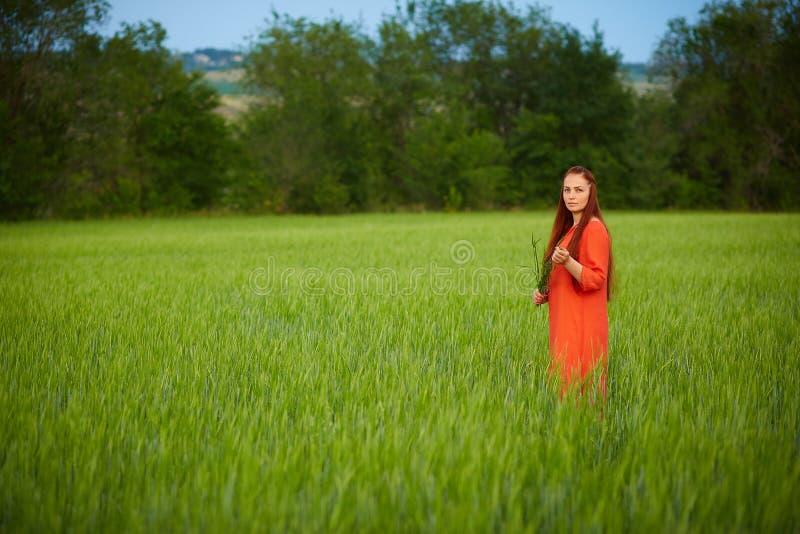 Kaukasische rothaarige Frau in einem roten Kleid gehend auf ein Bauernhoffeld mit Weizen bei Sonnenuntergang an einem Sommertag Z stockfotografie