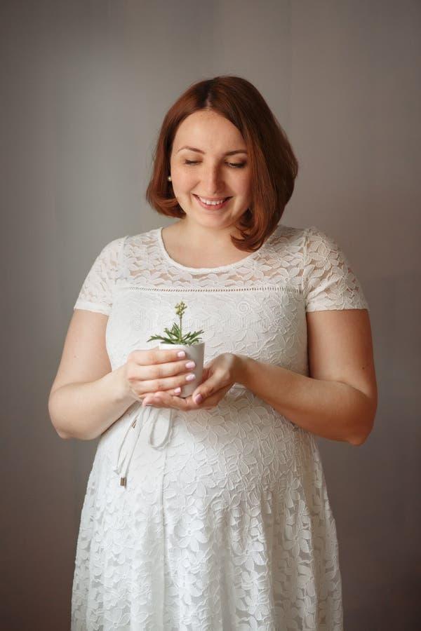Kaukaska miedzianowłosa kobieta w ciąży stoi w domu trzymać małej zielonej rośliny w garnku w biel sukni obraz stock