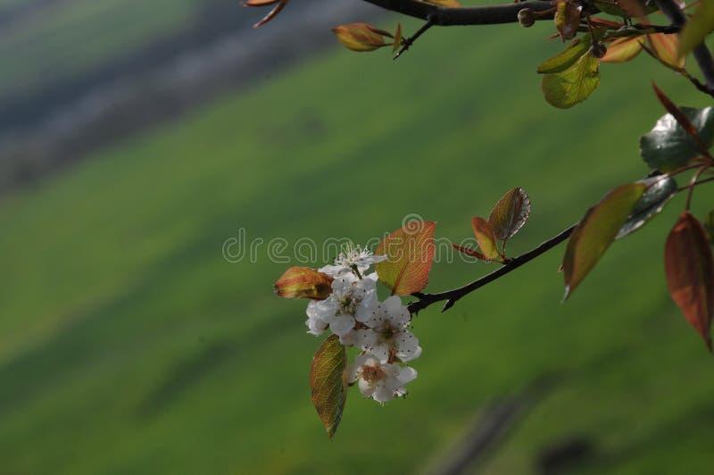 Kausani的,印度植物 免版税库存照片
