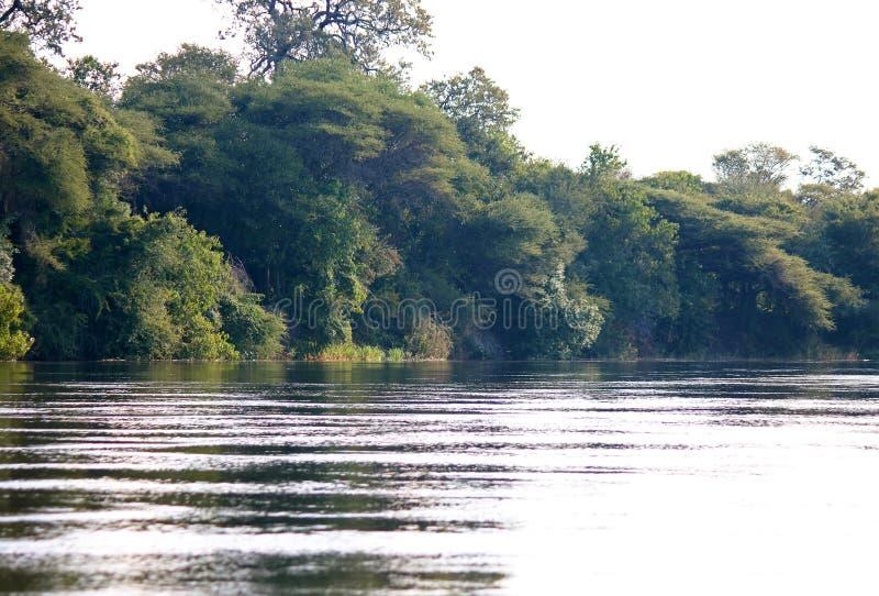 KAVANGO rzeka Z drzewami NA brzeg rzekim zdjęcie stock