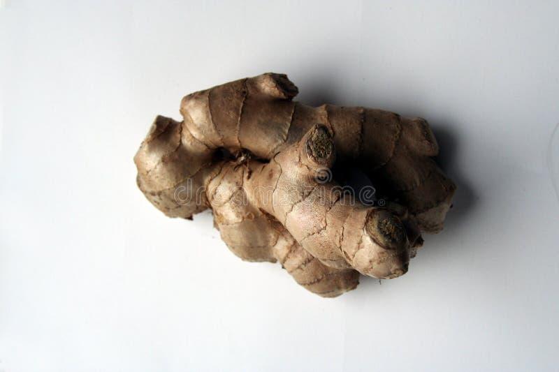 kawałek korzenia imbiru w white obraz stock