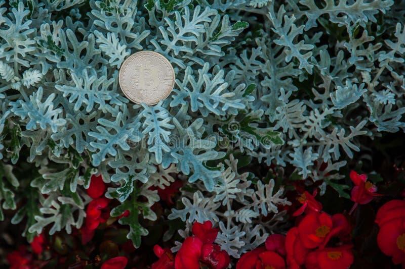 Kawałek moneta na krzakach obrazy stock