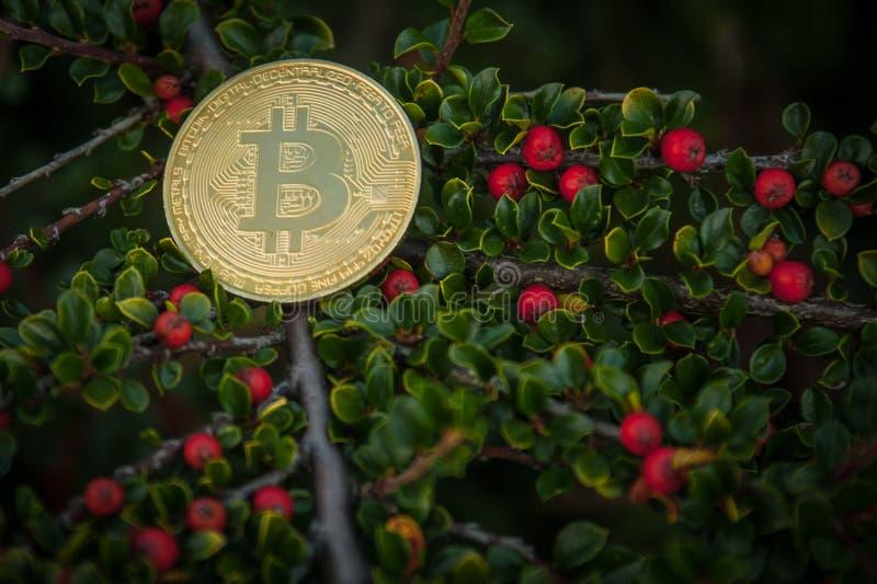 Kawałek moneta na krzakach zdjęcia royalty free
