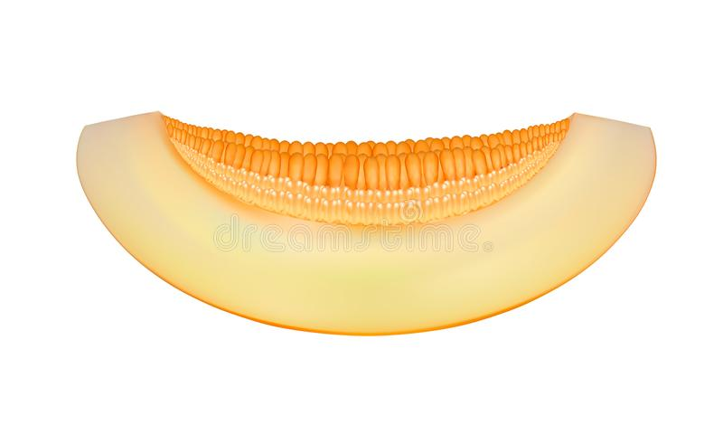 Kawałek odizolowywający na białej tło ilustraci melon ilustracja wektor