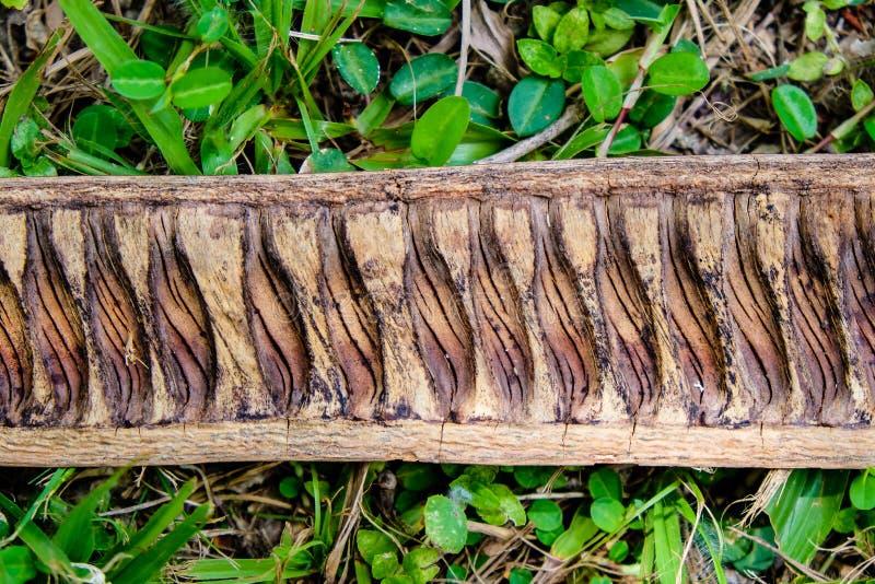 Kawałek suchy drewniany lying on the beach na trawie w drewnach zdjęcia stock