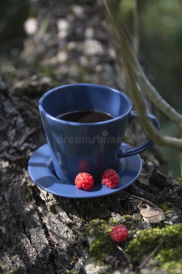 Kawa i malina na korze wierzby zdjęcia royalty free
