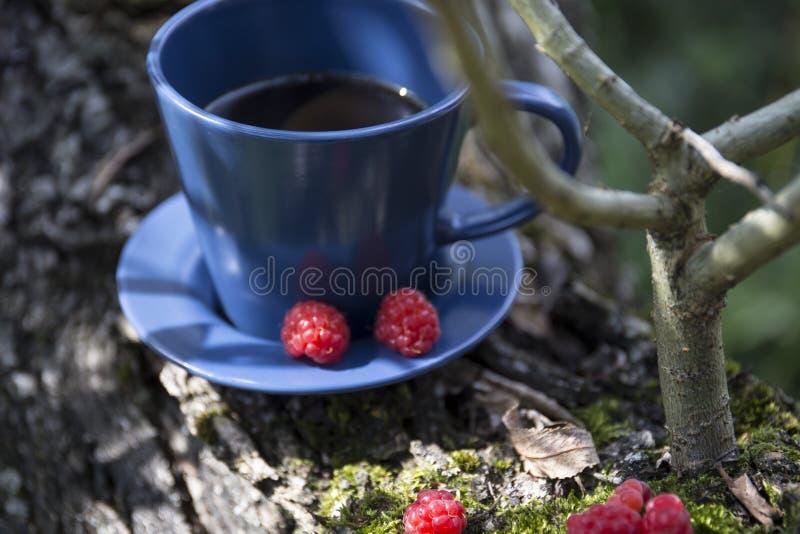 Kawa i malina na korze wierzby z gałęzią obrazy royalty free