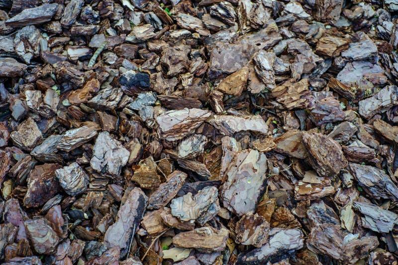 Kawa?ki zamkni?ci w g?r? drzewna barkentyna Tekstury, brązu i szarość tło, horyzontalna abstrakcjonistyczna makro- fotografia obraz royalty free