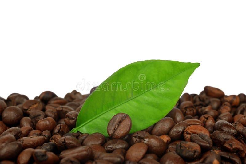 Kawa liść i adra fotografia royalty free
