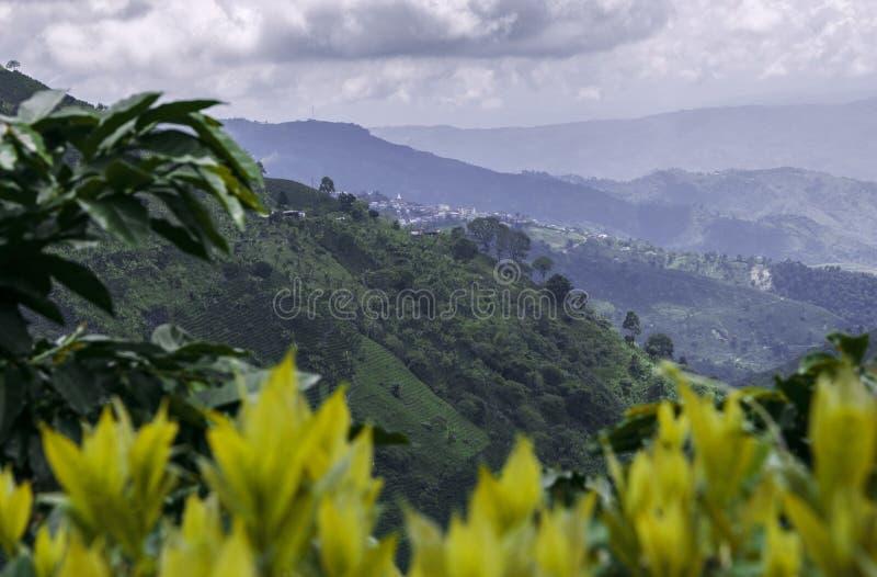 Kawa zasadza Kolumbia obraz stock
