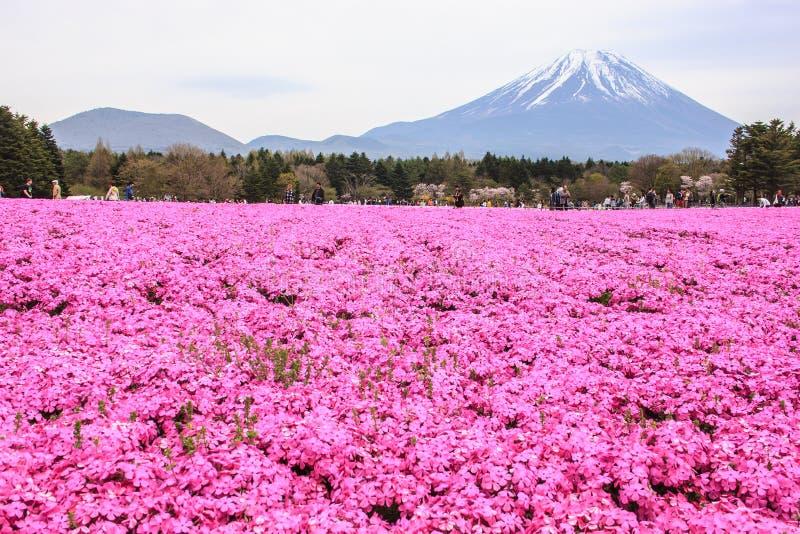 KAWAGUCHIKO, JAPAN-MAY 07,2017: Los turistas disfrutan de la vista del polemonio de musgo o de los campos rosados hermosos de shi imagenes de archivo