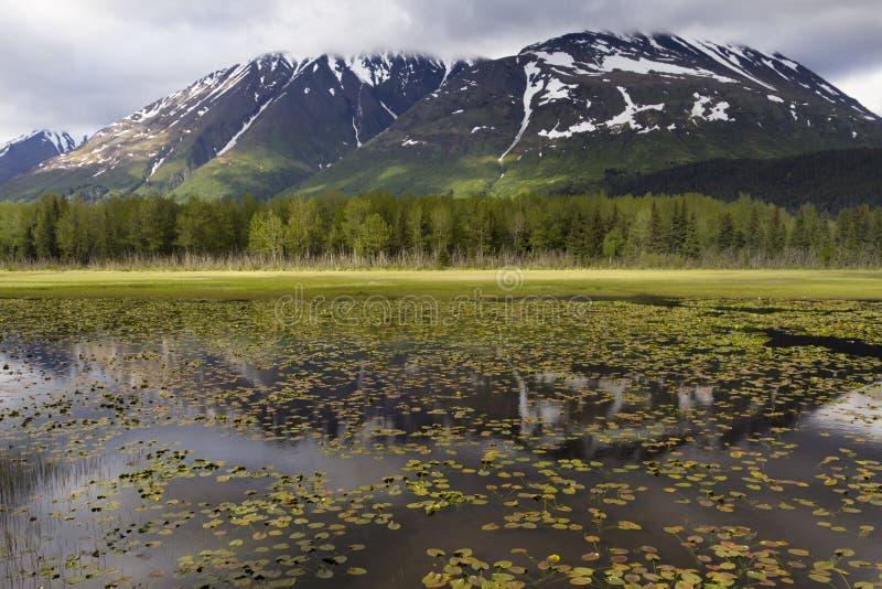 kawaler zakrywający jeziornych gór śnieżni drzewa zdjęcie royalty free
