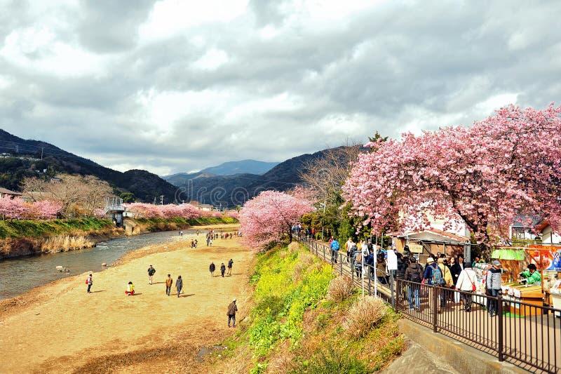 Kawazu Sakura Festival stockbilder