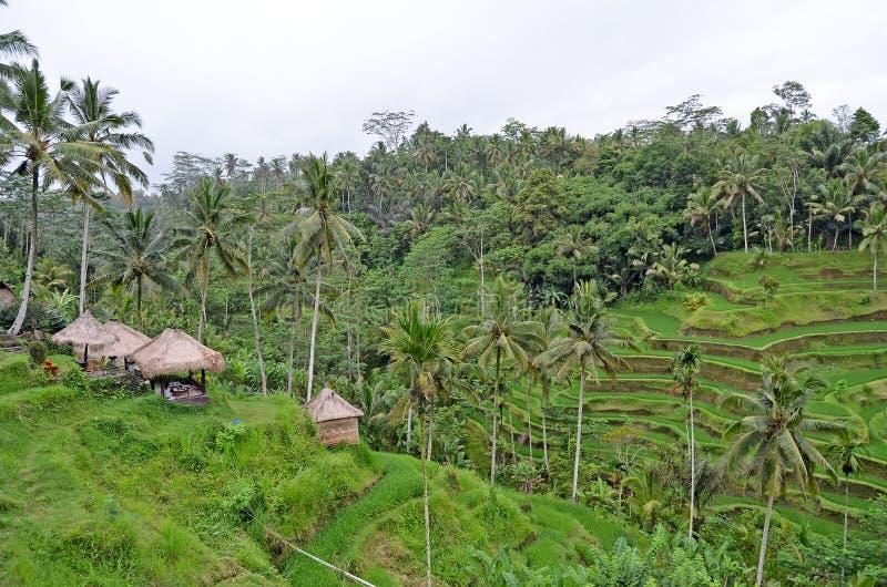 Kawiarnia wśród drzewek palmowych bali Indonezja fotografia stock