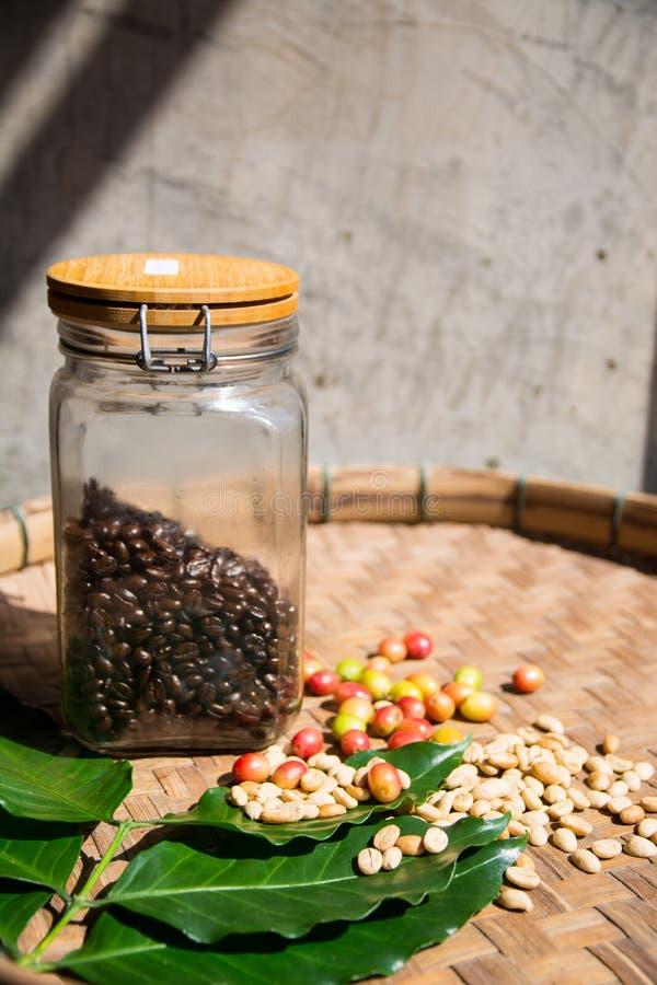 Kawowa fasola w butelce z czereśniowymi fasolami zdjęcie royalty free