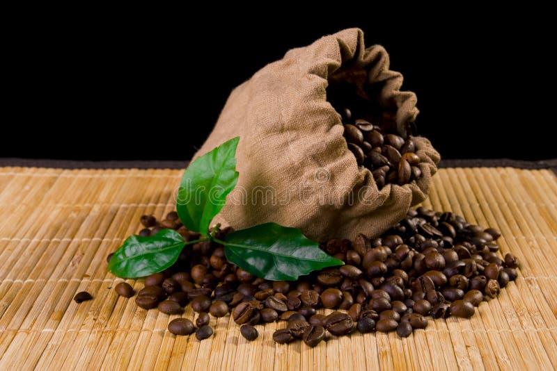 kawowa torby roślina zdjęcie stock