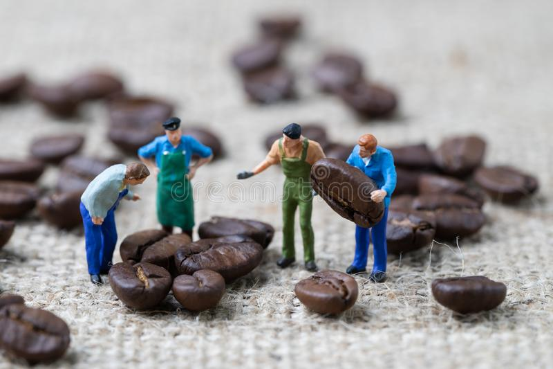 Kawowe fasole eksperta lub profesjonalisty biznesowy pojęcie, miniaturowi ludzie figurka pracownika wybiera piec kawowe fasole na obrazy stock