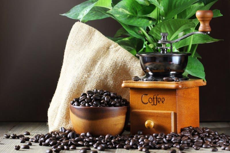 Kawowe fasole w kawowych ostrzarzach na drewnianym i filiżance zdjęcia stock