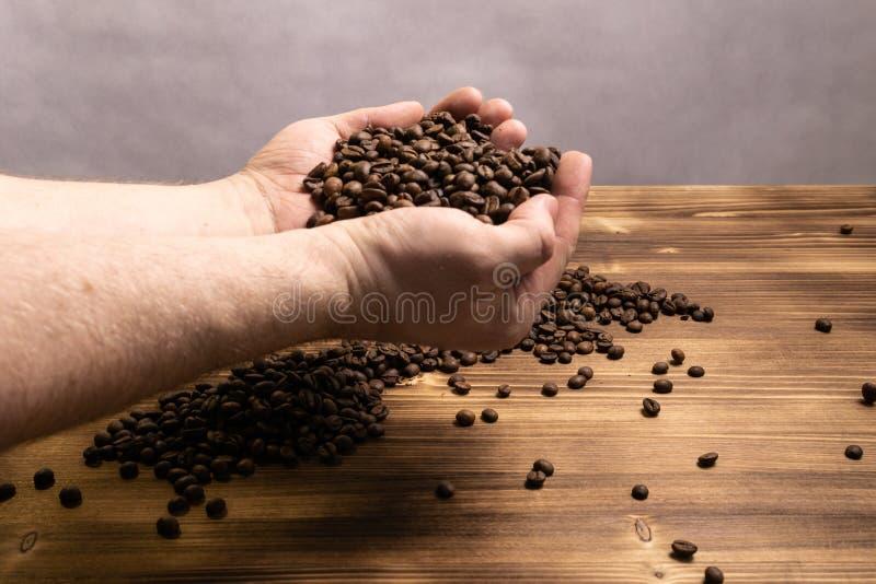 Kawowe fasole w rękach na drewnianym tle zdjęcie stock