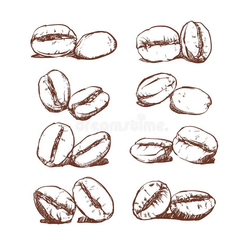 Kawowej fasoli ręka rysujący wektor, nakreślenie kawowe fasole royalty ilustracja