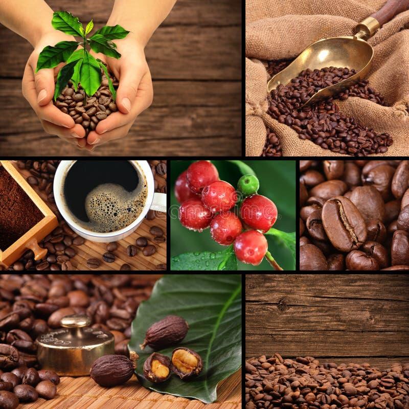 Kawowy kolaż obraz stock