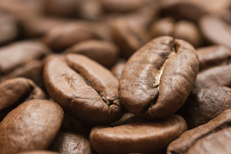 kawowy przybycie opuszczać kawowy zasadza ziarno trzon obrazy royalty free