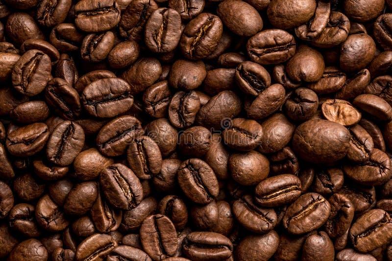 kawowy przybycie opuszczać kawowy zasadza ziarno trzon obrazy stock
