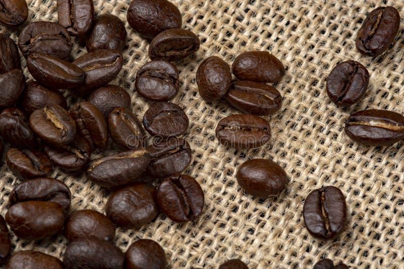 Kawowych fasoli Arabica zdjęcia royalty free