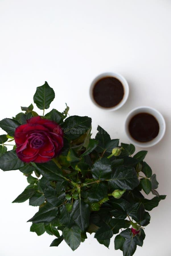 Kawy daty ustawianie obrazy stock
