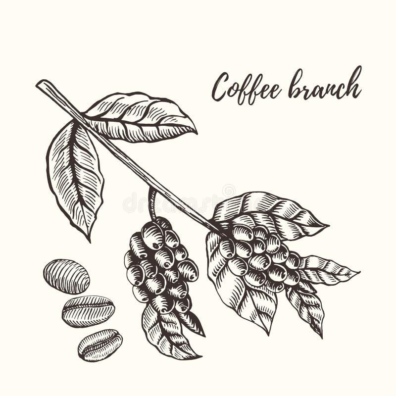 Kawy gałąź z jagodą szczotkarski węgiel drzewny rysunek rysujący ręki ilustracyjny ilustrator jak spojrzenie robi pastelowi trady royalty ilustracja