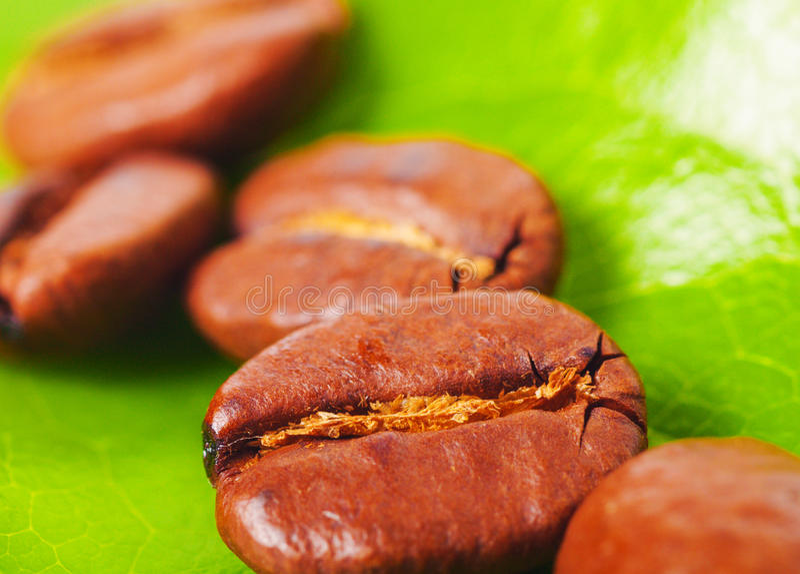 kawy zieleń obraz stock