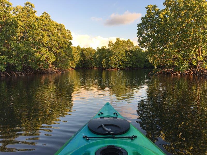 Kayak à travers la mangrove photos libres de droits