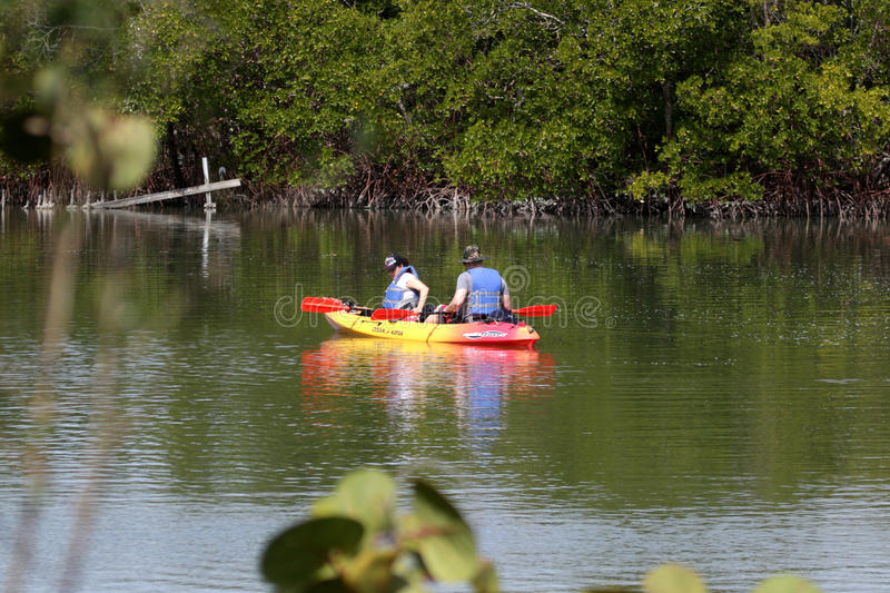 A Kayak on the Estuary at Lovers Key State Park. He mangrove protected estuary stretches 2. 5 miles and is the home to many incredible species of birds, fish and stock images