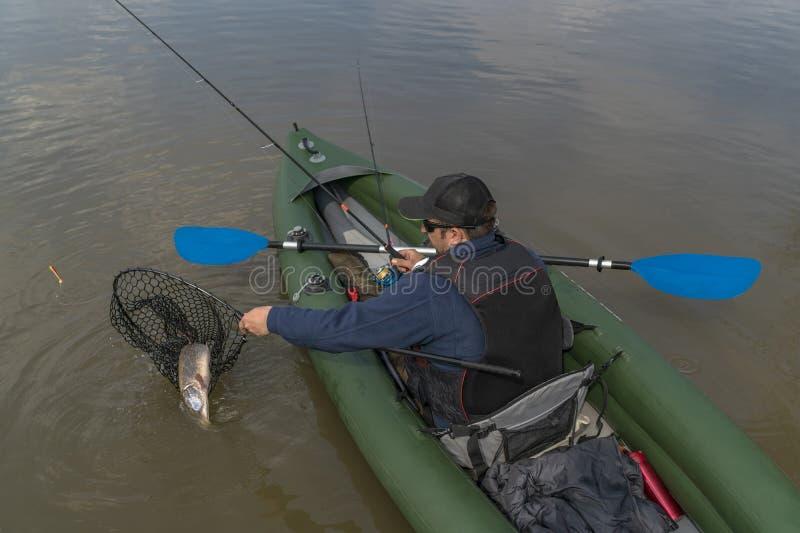 Kayak fishing. Fisherman caught pike fish on inflatable boat with fishing tackle at lake royalty free stock image