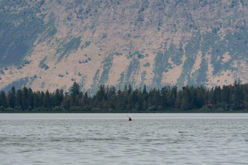 Kayaker barbotant sur le lac klamath en Orégon du sud photos stock