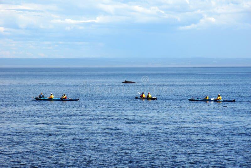 Kayakers del mare e balena minke fotografia stock libera da diritti