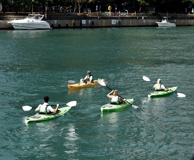 Kayakers op de Rivier van Chicago stock afbeelding