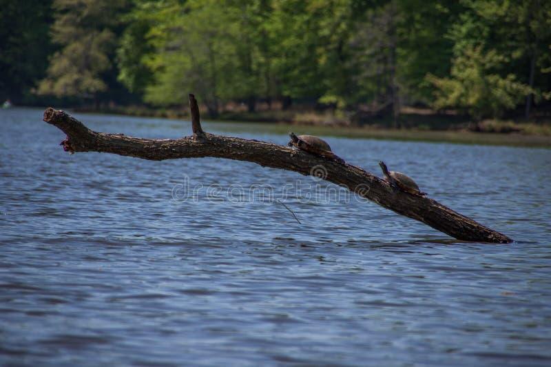 Kayaking at Fountainhead stock photos