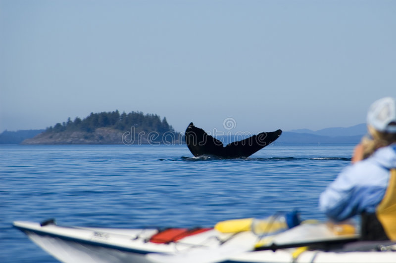 Kayaking and humpback tail royalty free stock photos