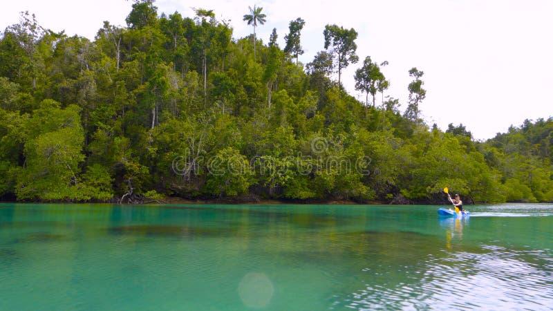 Kayaking i mangroveområde, västra Papua, Raja Ampat, Indonesien arkivbild