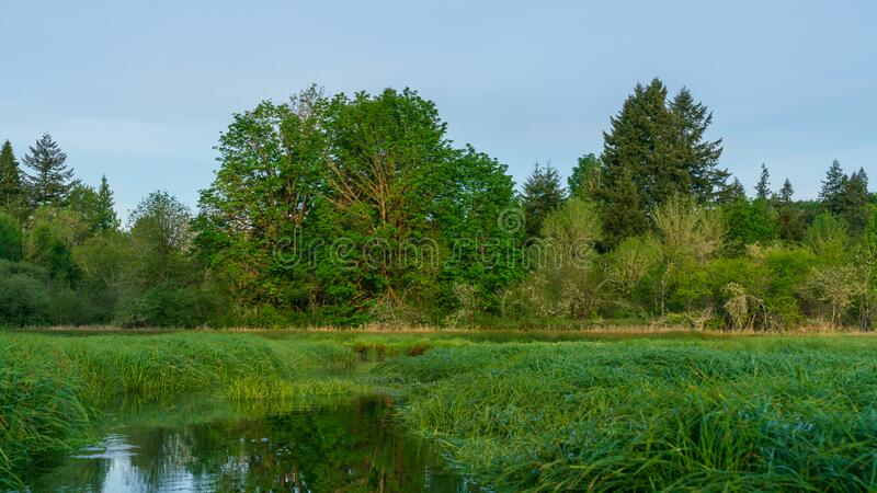 Kayaking On Kennedy Creek, Shelton Washington. Small Creek Early Morning With Still Waters In Western United States royalty free stock images
